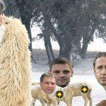 becali si oile